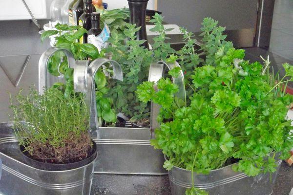Pasos para plantar hierbas aromáticas. Cómo mantener las plantas aromáticas. Tips para cultivar aromáticas en casa