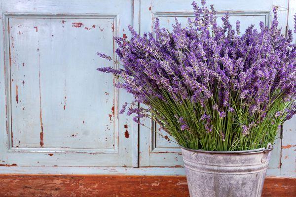 Lista de flores para usar en tratamientos de belleza y salud. Las mejores flores para usar en cremas caseras.