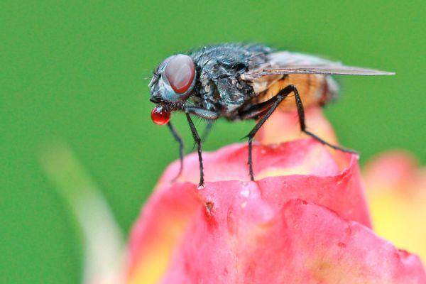 Eliminar plagas del jardín con un jabón insecticida. Jabón casero para elminar insectos de las plantas. Receta de jabón de potasa casero