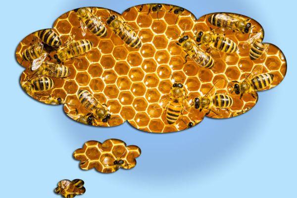 Interpretacion de los sueños: abejas, colmenas y miel. El lenguaje de los sueños. Qué significa soñar con abejas que te pican