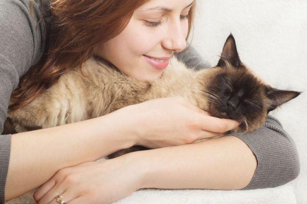 Claves para el cuidado de un gato. Tips para cuidar a los gatos. Cómo alimentar y cuidar a un gato