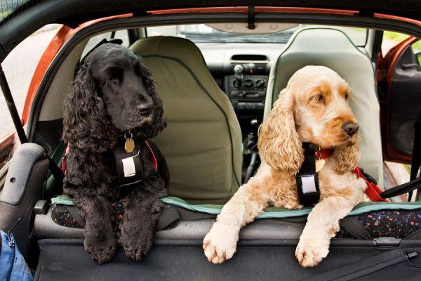 Cómo ir de vacaciones con tu mascota. Qué tener en cuenta al ir de viaje con tu perro o gato. Guía para viajar con mascotas.