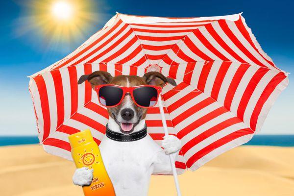 Ingredientes con fps natural. Cómo protegerse del sol desde la alimentacion. Comidas para mejorar la protección solar