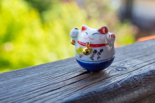 Feng Shui para el bienestar de las mascotas. Cómo cuidar a las mascotas con el Feng Shui. Consejos del Feng Shui para aplicar en las mascotas de casa