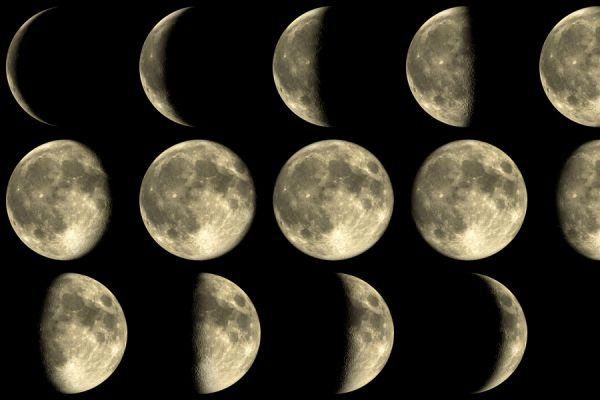 La influencia de la luna en las plantas. Beneficios de la luna para el jardín. Cómo hacer tareas de jardinería según el calendario lunar