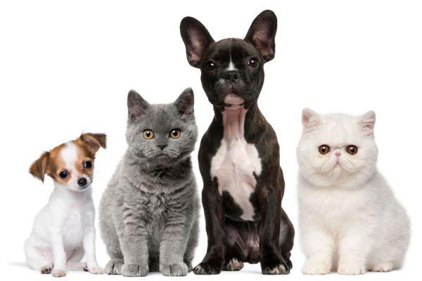 Sitios para encontrar pareja para tu perro o gato. Páginas de citas para perros y gatos. Redes sociales para mascotas
