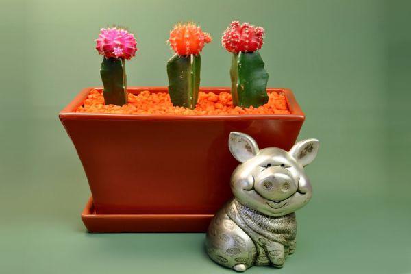 Ideas para decorar con piedras pintadas. Cactus pintados en piedras de rio. Decorar el jardín con cactus dibujados en piedras.