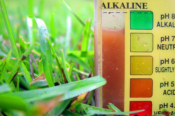 Tips para saber cuál es el ph del suelo. Métodos para saber si el suelo es acido o alcalino. Descubre cual es el ph del suelo de tu jardín