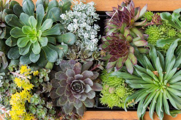 Guía para hacer cuadros con suculentas y otras especies. cuardros originales con plantas. Cuadros con plantas pequeñas