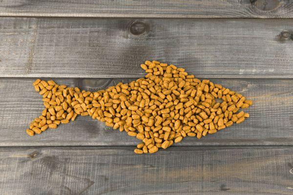 Recetas de bocadillos caseros para perros y gatos. Cómo hacer bocadillos saludables para mascotas. Bocadillos caseros para perros y gatos.