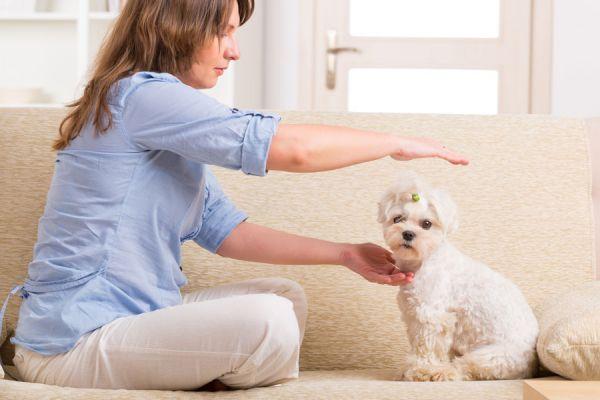 Reiki para animales. Pasos para hacer  reiki a los animales. Beneficios del reiki para las mascotas