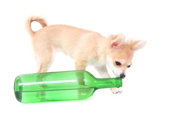 Cómo hacer vomitar a un perro envenenado. Pasos para hacer vomitar al perro. Guía para provocarle vómito a un perro.