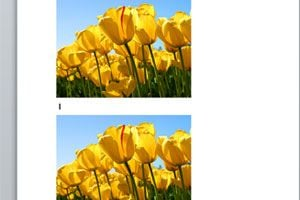 Ilustración de Copiar Imagenes sin Utilizar Copiar y Pegar en Word