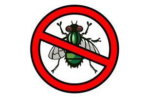 Las moscas se pueden repeler con algunos trucos caseros