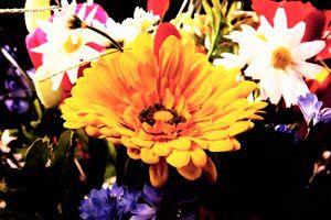 Cómo adornar con flores naturales