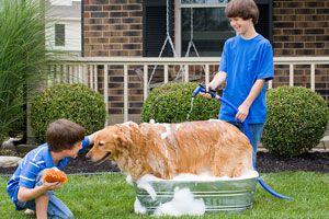 Ilustración de Cómo bañar a un perro