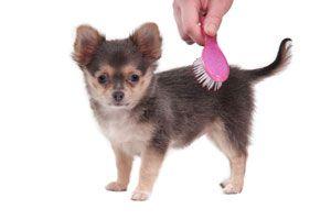 Ilustración de Cómo cepillar a un perro