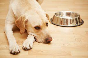 Ilustración de Cómo Alimentar a un Perro
