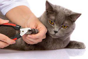 Ilustración de Cómo cortar las uñas de un gato