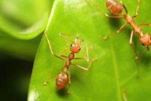 Elimina las hormigas del jardín con métodos seguros