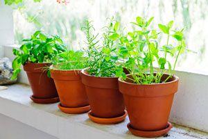Cómo elegir las Plantas para el Balcón