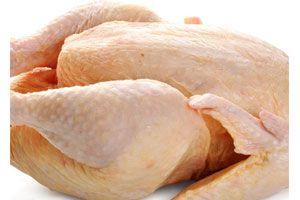 Ilustración de Cómo eliminar los restos de pluma o canutos de un pollo, gallina o pavo