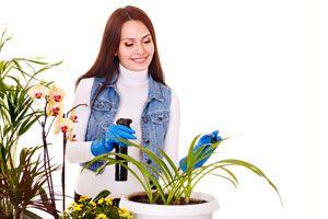 Cómo regar las plantas de interior en invierno