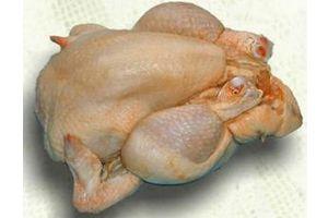 Ilustración de Cómo elegir un pollo fresco