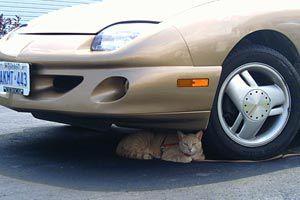 Ilustración de Como alejar los gatos del coche