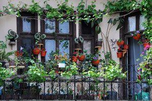 Como armar un jardín en el balcón o terraza de acuerdo a su orientación