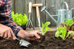 5 pasos para cuidar de una huerta. Tips de cuidado y mantenimiento de una huerta casera. ¿Qué tareas de mantenimiento necesita una huerta en casa?