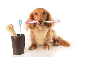 Ilustración de Cómo cepillar los dientes a los perros