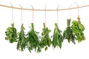 Ilustración de Cómo preparar un ramito de hierbas aromáticas o bouquet