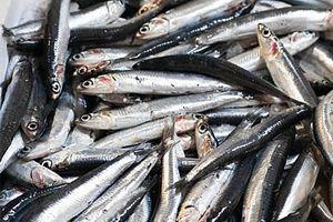 Ilustración de Cómo desalar las anchoas
