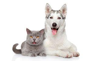 Ilustración de Como lograr que los perros y gatos sean amigos