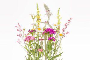 Ilustración de Cómo clasificar las plantas según sus tallos