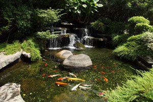 Ilustración de Consejos para tener un estanque de peces