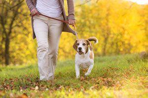 Ilustración de Cómo Entrenar a un Perro. Entrenamiento básico