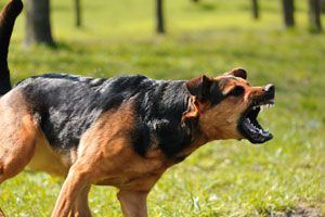 Ilustración de Cómo enseñarle al Perro a Ladrar cuando sea necesario