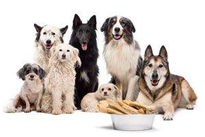 Ilustración de Cómo elegir al Perro Ideal