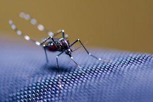Ilustración de Cómo hacer una Efectiva Trampa Casera para Mosquitos