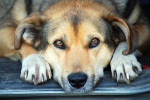 Como cortar las uñas a un perro