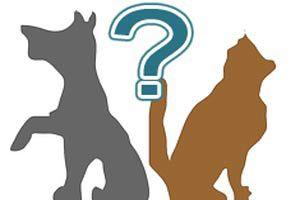 Ilustración de Cómo elegir entre un gato y un perro como mascota