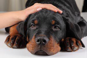 Ilustración de Cómo prevenir la ansiedad por separación en una mascota