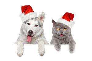 Ilustración de Cómo ayudar a nuestras mascotas a pasar las Fiestas Navideñas sin sufrimiento