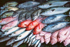 Ilustración de Cómo se clasifican los pescados