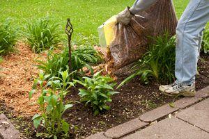 Como realizar un acolchado en la tierra. Diferentes materiales para hacer un mulching.