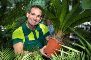 Las palmeras suelen sufrir los ataques de muchas plagas, ademas de otros problemas. Aprende cómo cuidar las palmeras de plagas y otros problemas