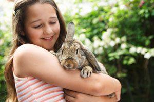 Ilustración de Como tener a un conejo de mascota