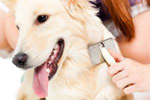 Ilustración de Como cuidar el pelaje de nuestro perro
